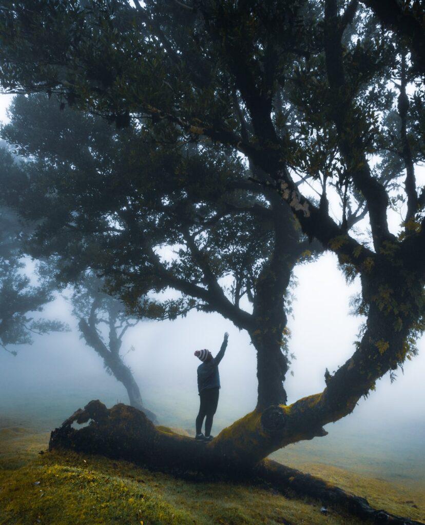 Silhueta de Marjorie em um tronco de árvore centenária na Ilha da Madeira. O clima cenário está coberto de névoa, o chão é gramado e verde.