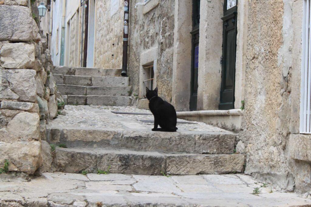 Gato preto sentado no meio de uma rua Medieval em Kotor