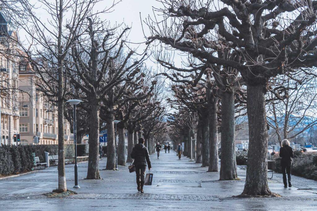 Várias árvores, já sem folhas e com galhos grossos, circundando uma avenida pedonal na margem do lago de Zurique.