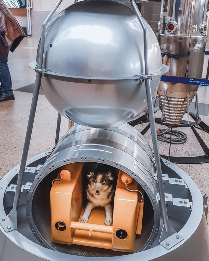 Exposição da réplica da Laika, o primeiro cachorro que foi para o espaço, no Museu do Cosmos.